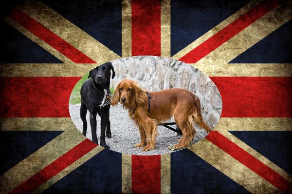 El Reino Unido entrenará perros para detectar el coronavirus